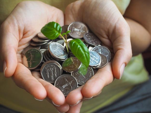 Pièces de monnaie des eau. pièces et plante verte dans les paumes.