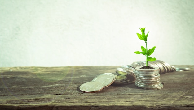 Pièces de monnaie avec jeune plant sur la table avec mur de ciment de fond.