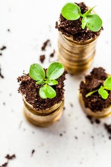 Pièces d'or dans le sol avec le jeune plant. concept de croissance de l'argent.