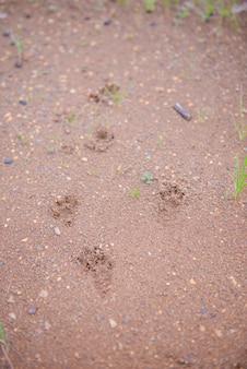 Pied d'animal au sol