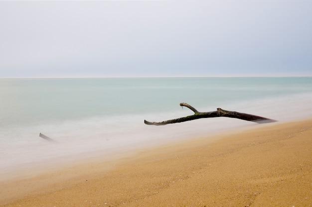 Piège à bois sur la plage