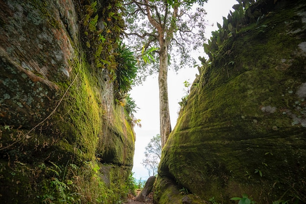 Pierre couverte de mousse. la mousse verte qui a poussé couvre les pierres. concept de la nature.