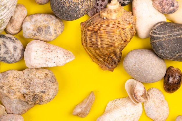 Pierres et coquillages sur fond jaune. thème marin