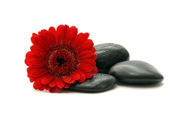 Pierres et fleur rouge sur fond blanc