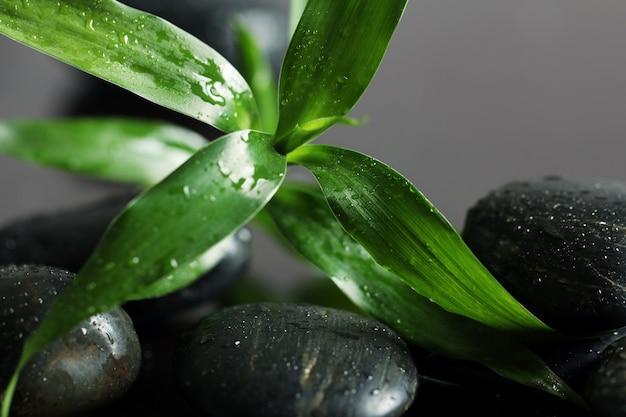 Pierres de massage et feuilles de bambou