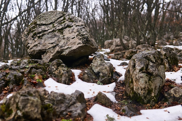 Des pierres ont décongelé sous la neige dans une forêt de montagne au printemps