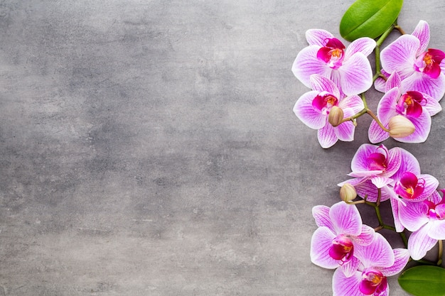Pierres d'orchidée et spa sur fond de pierre. scène de spa et de bien-être.