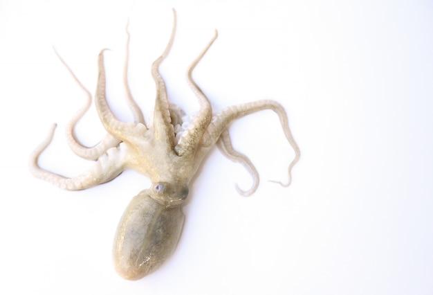 Pieuvre crue sur fond blanc pour la modification des aliments
