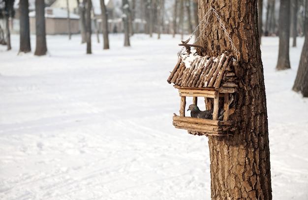 Pigeon. colombe dans un nichoir en bois sur un arbre dans un parc enneigé d'hiver. concept de soins des animaux