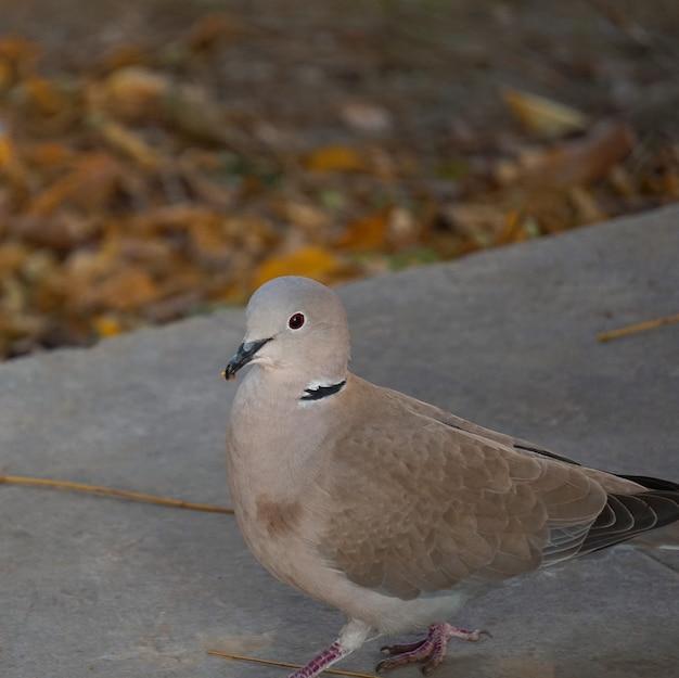 Le pigeon dans le parc en pleine nature