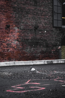 Pigeon gris sur une chaussée en béton gris