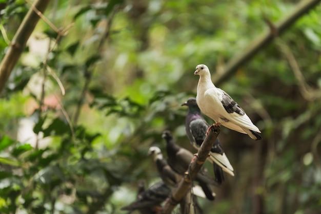 Pigeon perché sur la branche d'arbre
