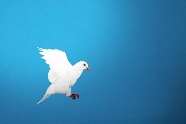 Pigeon volant avec un fond coloré