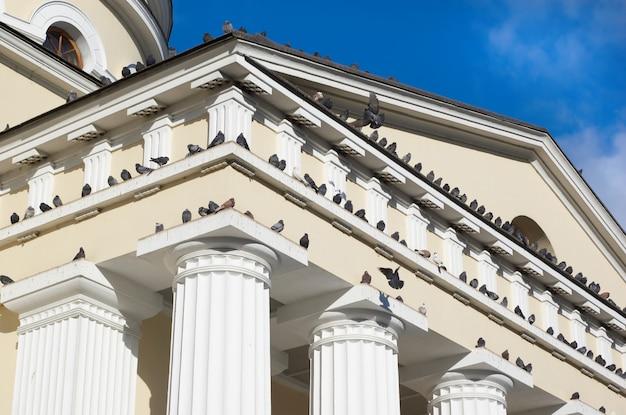 Pigeons assis et volant