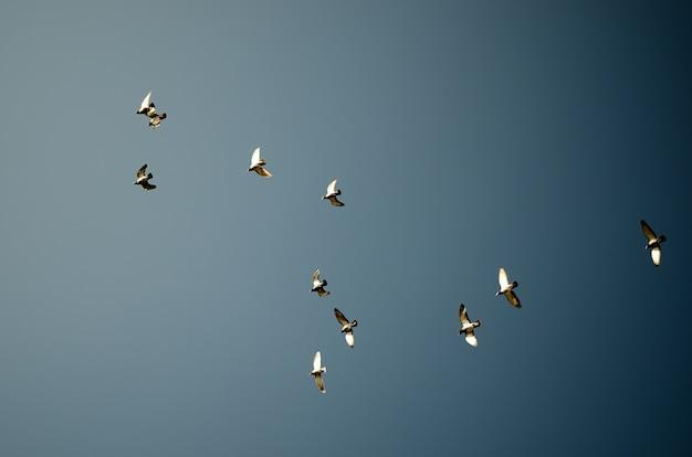 Pigeons contre fond de ciel bleu