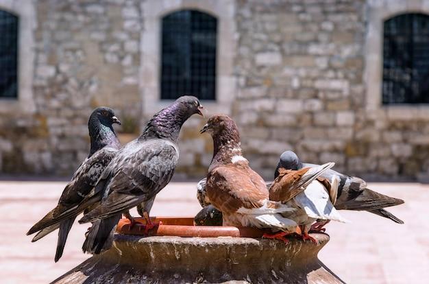 Pigeons debout près de l'ancien mur de pierre de l'église, vieille ville de larnaca