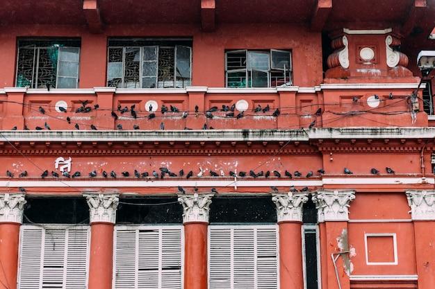 Pigeons, rassemblement, sur, fil électrique