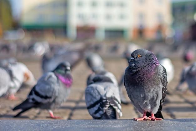 Les pigeons se prélassent sur la place de la ville sous le soleil à la fin de l'automne