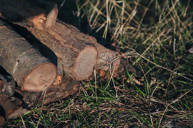 Pile de bois de chauffage dans le champ sur l'herbe. beaucoup de bois sec