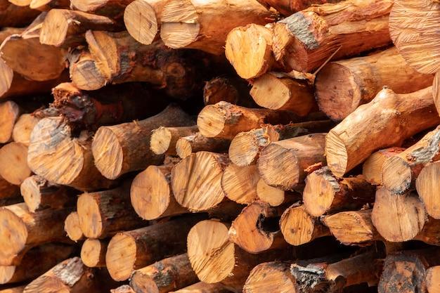 Une pile de bois de mangrove à l'usine de charbon de bois