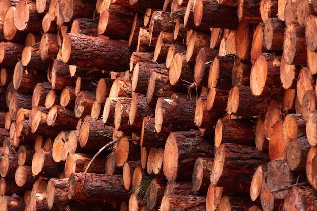 Pile de bûches de bois pour le bois de chauffage forêt de pins bois de chauffage fraîchement coupé et abattu