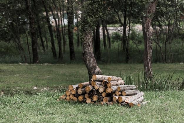 Pile de bûches dans la forêt