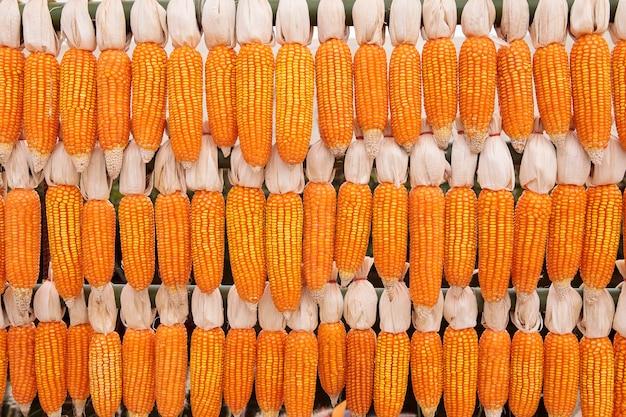 Pile de maïs cru décoré dans une ferme rurale de thaïlande