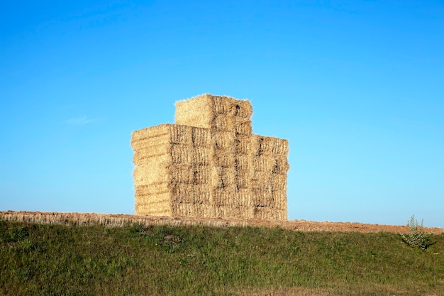 Une pile de paille de blé, qui est dans le champ après la récolte
