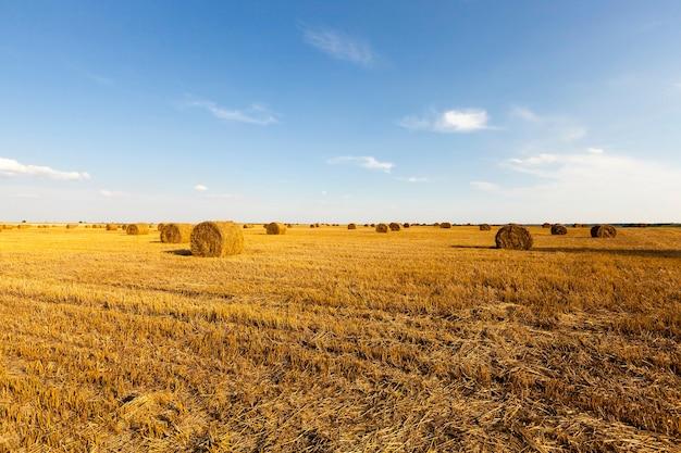 Pile de paille un champ agricole où récoltent les céréales et la paille collectées