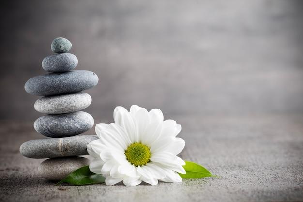 Pile de pierres et fleur de marguerite