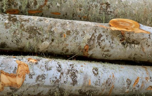 Pile des rondins de bois au village de flanc de montagne