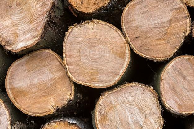 Pile de troncs hachés soigneusement empilés à l'extérieur