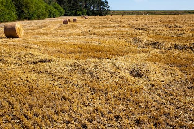 Piles après la récolte