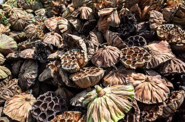 Des piles de gousses sèches de lotus