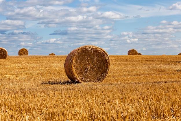 Des piles de paille de blé ont été laissées après la récolte du blé