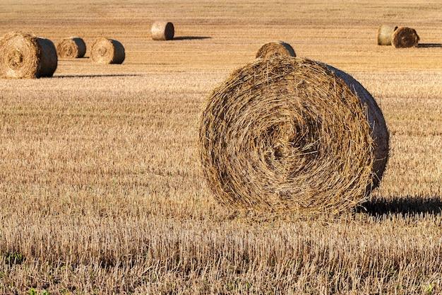 Piles rondes cylindriques de paille après la récolte du grain