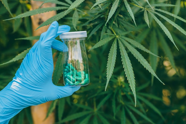 Pilule médicinale à base de marijuana ou de bourgeons de chanvre, extrait de thc de sativa cannabis indica pour le concept de traitement médical