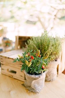Piments dans un pot avec une boîte en bois sur l'arrière-plan