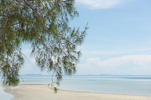 Pin, branche de casuarina equisetifolia sur fond de plage tropicale