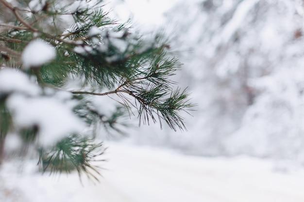 Pin dans la couverture de neige closup