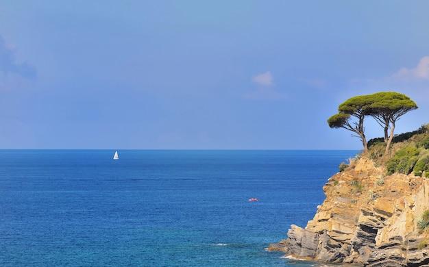 Pin maritime sur une falaise