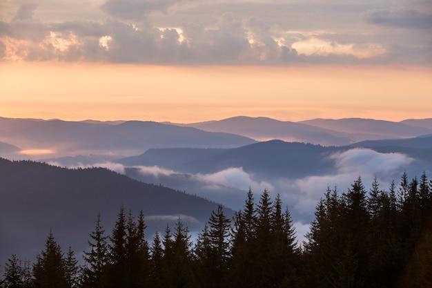 Pin noir sur les montagnes, les vallées brumeuses et le ciel rose au lever du soleil
