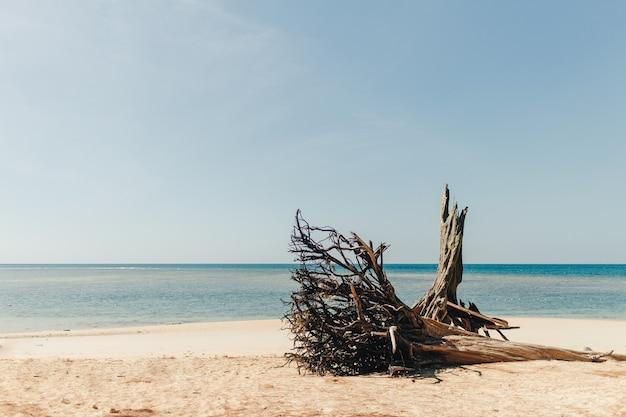 Pin sur la plage avec la mer bleue et le ciel à phuket