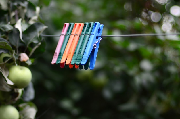 Pinces à linge sur une corde suspendue à l'extérieur de la maison et pommier