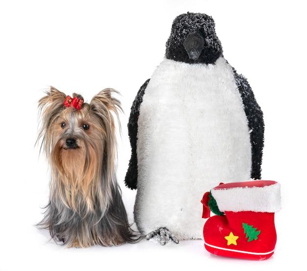 Pingouin et chien