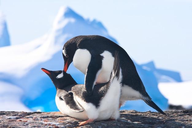 Pingouins en antarctique