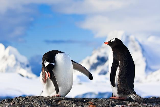 Pingouins sur un rocher