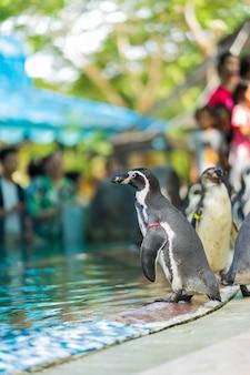 Les pingouins sont debout dans le zoo