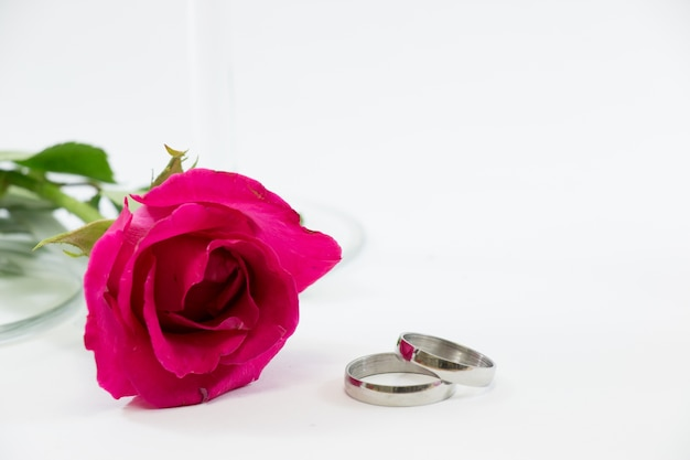 Pink rose, engage ring with love en saint valentin