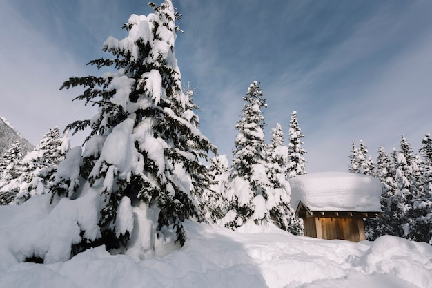 Congere de neige vecteurs et photos gratuites - Photos de neige gratuites ...